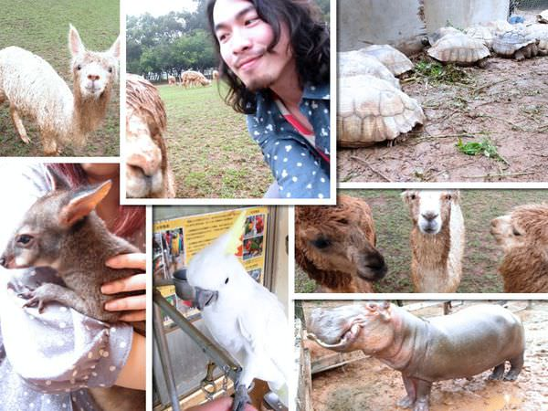 台中 新天馬牧場 草泥馬&動物的人間煉獄(2014/12月更新)